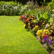 Foto de Stock  : Colorful garden flowers