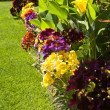 Stock Photo: Colorful garden flowers