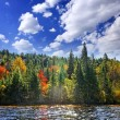 Stock Photo: Fall forest in sunshine