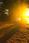 Sunshine in evening forest near lake — Stock Photo