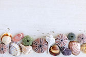 Background with seashells — Stock Photo