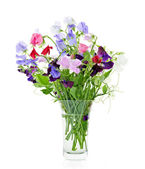 Bouquet of sweet pea flowers in vase — Stock Photo
