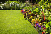 Coloridas flores del jardín — Foto de Stock