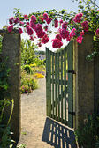 Open garden gate with roses — Stock Photo