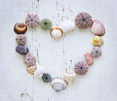 Heart of seashells and rocks — Stock Photo