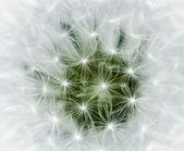 Dandelion background — Stock Photo