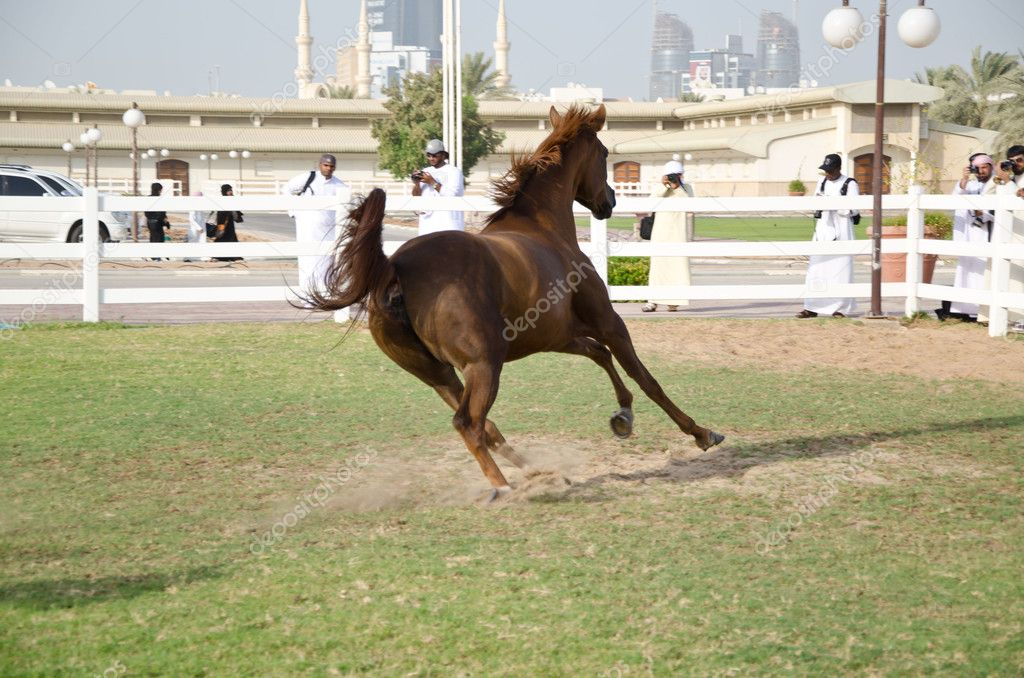 Arabian Horse — Stock Photo #6345555