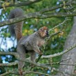 Lemur on the tree — Stockfoto