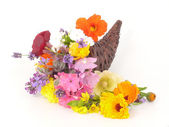 Floresce em cornucópia — Foto Stock