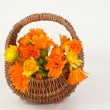 Calendula — Stock Photo #6162859