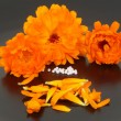 Stock Photo: Globules and marigold