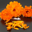 Globules and marigold — Stock Photo