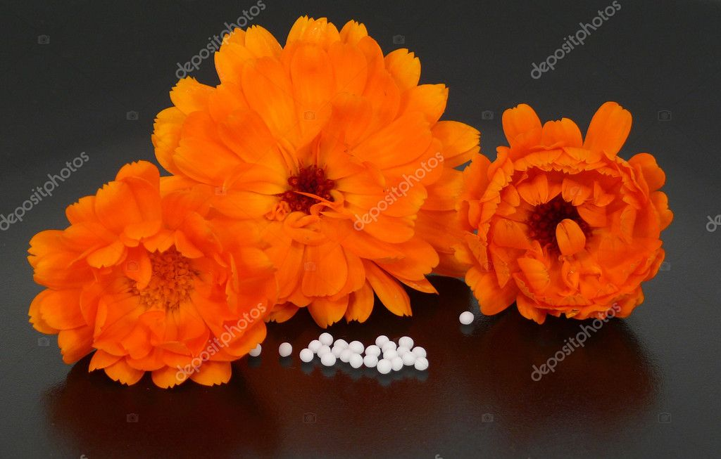 Globules and marigold blooms — Photo #6571677