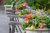 Benches in garden — Stock Photo
