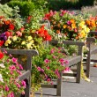 Stock Photo: Benches and flowers