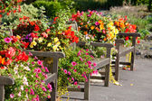 Benches and flowers — Stock Photo