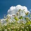 Stock Photo: White flowers on background of blue sky