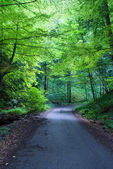 Forest road on a sunny day — Stock Photo