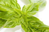 Leafs of Basil — Stock Photo