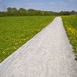 Sunny Path - Stock Photo