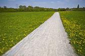 Sunny Path — Stock Photo