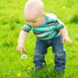 Little boy is playing on green meadow — Stock Photo