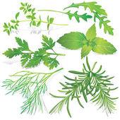 Raccolta di erbe fresche — Vettoriale Stock