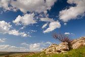 Tree under clouds — Стоковое фото