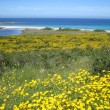 Stock Photo: Wild Flowery Beach