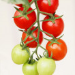small tomatos — Stock Photo