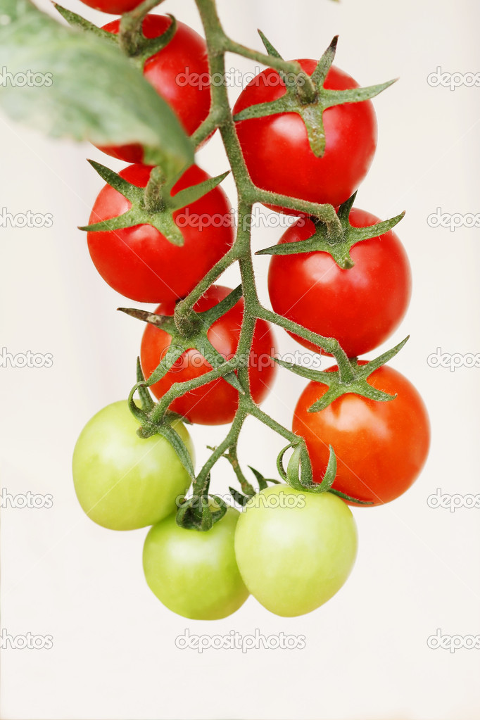 Small tomatos at branch isolated background  Stock Photo #6112087