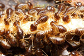 Group of termite — Stock Photo