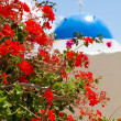 Geranium flowers with church background in Santorini — Stock Photo