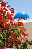 Geranium flowers with church background in Santorini — Stock Photo