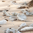 Dried up coral on shiluokou beach — Stock Photo #5629926