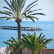 Stock Photo: Small palm trees in french riviera