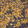 Autumn leaves — Stock Photo #5571305