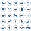 Icons animals — Stock Photo