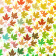 Stock Photo: Colourful Maple leaves