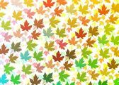 Colourful Maple leaves — Stock Photo