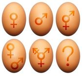 Egg gender — Stock Photo