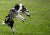 Flying dog — Stock Photo