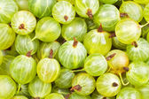 A bunch of gooseberry — Stock Photo