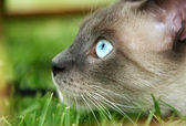 Cat close up, photo taken in natural environment — Stock Photo