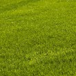 Lawn background — Stock Photo