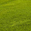 Lawn background — Stock Photo #6321152
