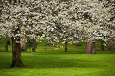 Tree in bloom — Stock Photo