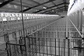 Modern breeding pig farm — Stock Photo