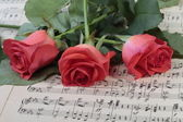 Wilted rose flower on the music paper — Stock Photo