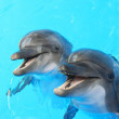 Dolphins swim in the pool — Stock Photo #6412135